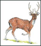 Sebuah Persahabatan Baik - Deer